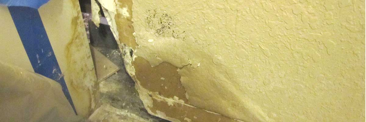 Mold Insurance Claim Denied