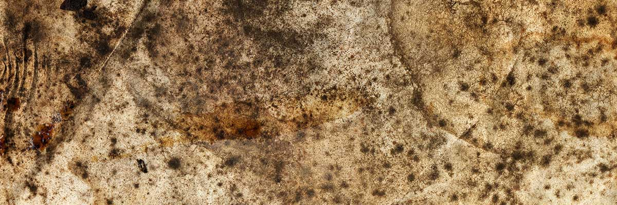 Homeowner's Mold Insurance Claims